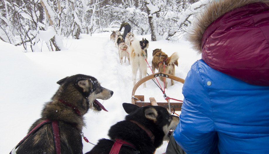 An exhilarating husky ride through the snow-covered forest.