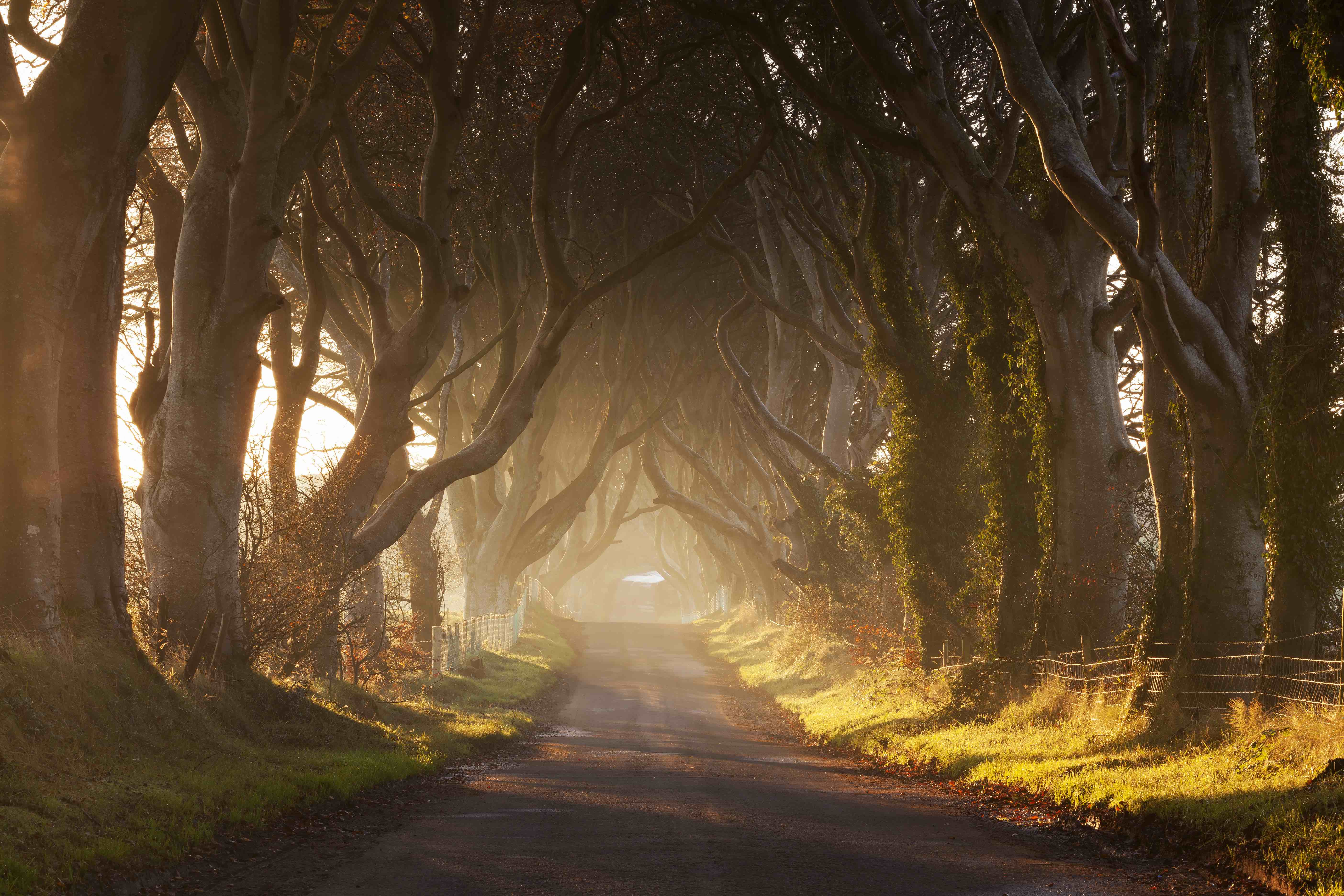The magnificently eerie Dark Hedges of Northern Ireland.