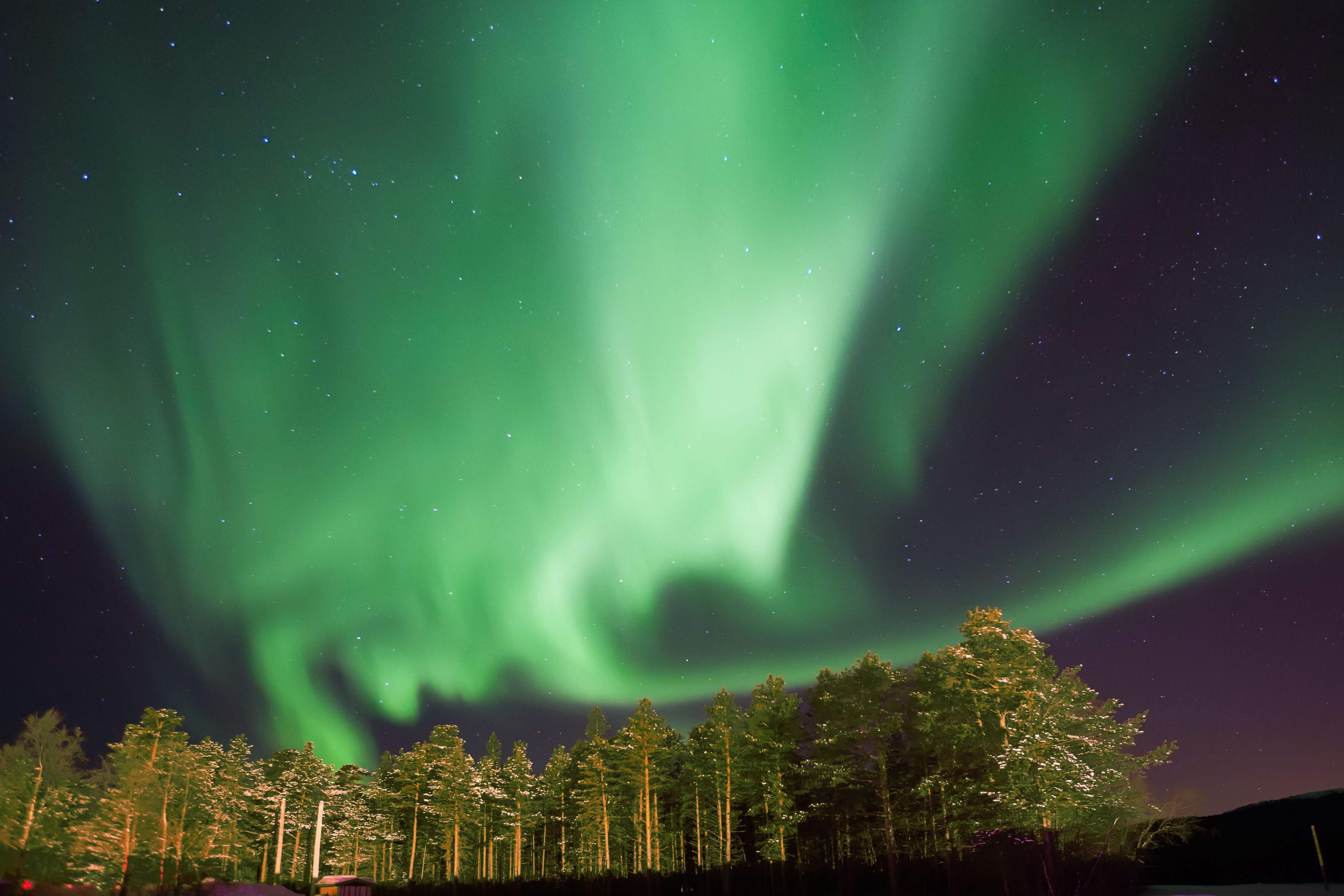 The Northern Lights at a forest near Alta, Norway.